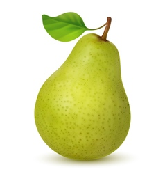 Big green pear with leaf vector image