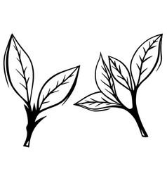 hand drawn set green tea leaf vector image