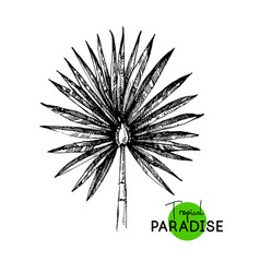 hand drawn sketch tropical paradise palm leaf vector image
