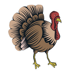 isolated turkey vector image