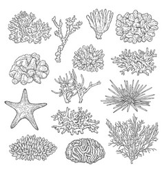 sea corals colonies and starfish sketch vector image