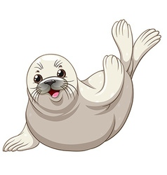 Seal with white skin greeting vector