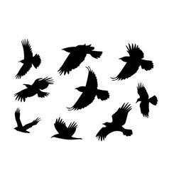 Set silhouette flying raven bird with no leg vector