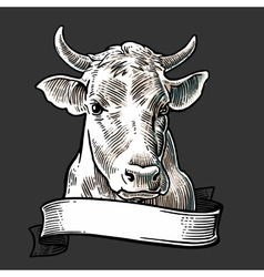 Cows head with ribbon Hand drawn in a graphic vector