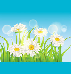 Fresh spring juicy chamomile flowers and green vector