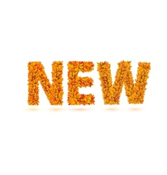 New word of autumn fall bright orange leaves vector
