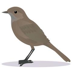 Nightingale vector