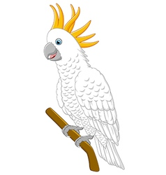 White parrot sitting on a branch Isolated vector