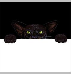 black oriental cat holding white paper banner vector image