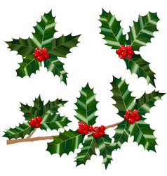 set of holly leaves berries and branch vector image