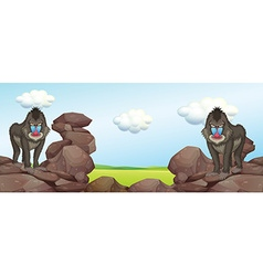 Two baboons standing on rocks vector