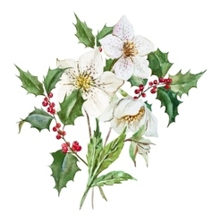Watercolor christmas flowers vector image
