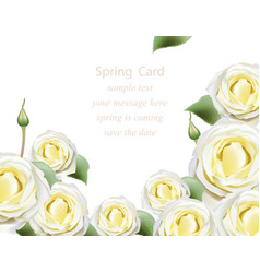 white delicate white roses blossom card beautiful vector image vector image