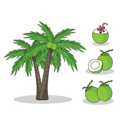 coconut on tree with white background isolated do vector image