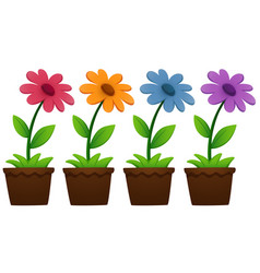 flowers in pots on white vector image