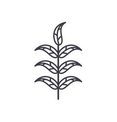 pecan leaf line icon concept pecan leaf flat vector image