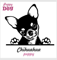 Puppy chihuahua - peeking dogs - breed face head vector