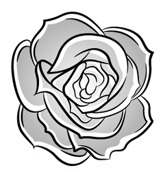 Rose decorative vector image