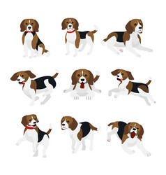 set of cute and funny beagle vector image
