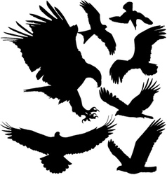 Birds of prey silhouettes vector image