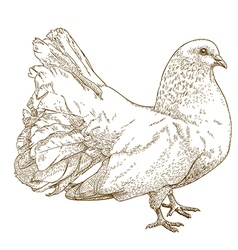engraving white dove vector image vector image