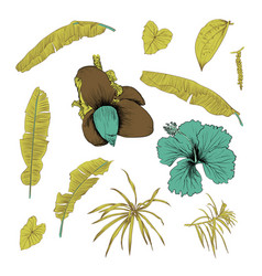 hand drawn of tropical plants banana leaves and vector image vector image