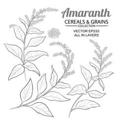 Amaranth plant set on color background vector