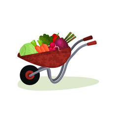 garden wheelbarrow full of fresh vegetables crop vector image