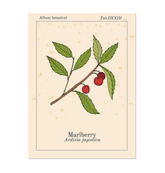 Marlberry ardisia japonica medicinal plant vector