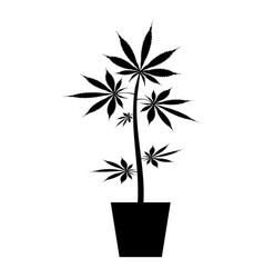 Pot of marijuana cannabic in pot hemp icon black vector