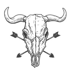 Vintage skull buffalo with crossed arrows vector