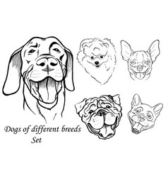 dogs of different breeds set vector image