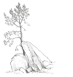 pine tree and rocks vector image vector image