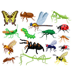 cartoon insects butterfly beetle spider vector image
