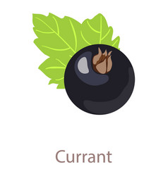 Currant icon isometric 3d style vector