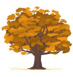 oak tree in autumn isolated vector image
