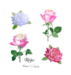 Roses watercolor flowers vector image