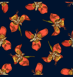 seamless pattern with hand drawn colored tigridia vector image