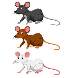 Three different colour of rat vector
