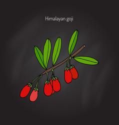 goji berry branch vector image