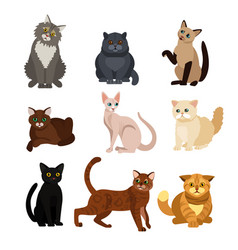 cat different breeds set vector image vector image