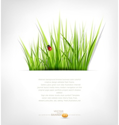 background with green grass vector image vector image