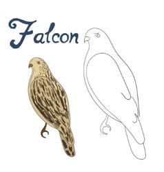 Educational game coloring book falcon bird vector