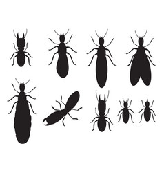 Set of black silhouettes termites on a white vector