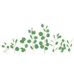 Silver dollar eucalyptus selection branches vector