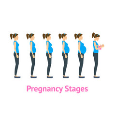 cartoon pregnancy stages and birth set vector image