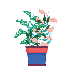 cute houseplant floral decoration vector image