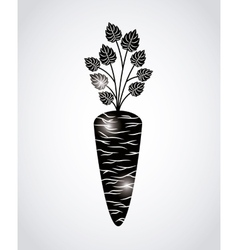 fresh carrot design vector image
