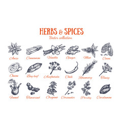 Herbs and spices condiments 4 vector