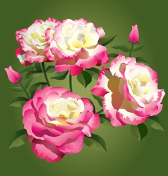 Roses - pink and yellow vector